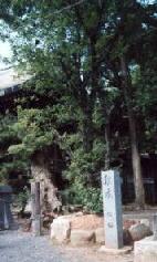 tobata22.jpg